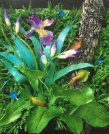 gilardi piero - orchidee selvatiche