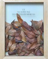Ce ne sont pas des feuilles mortes